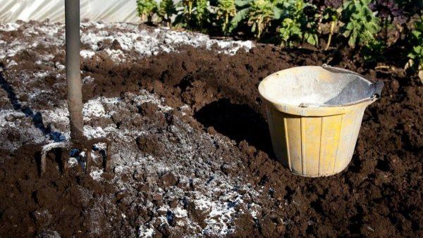 Известкование почвы в саду: зачем, когда и как это необходимо делать? –  Дизайн Кафе