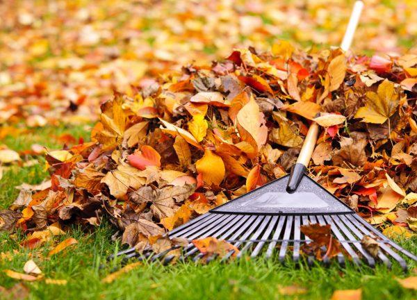 Что делать с листьями в саду: полезные советы. Мульчирование и многое другое…