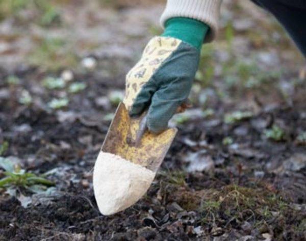 Известкование почвы: цели, норма внесения извести, технология выполнения  осенью, весной, первично, повторно
