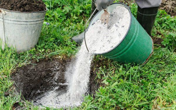 Как раскислить почву на участке – полезные советы для садоводов и  огородников | Дела огородные (Огород.ru)