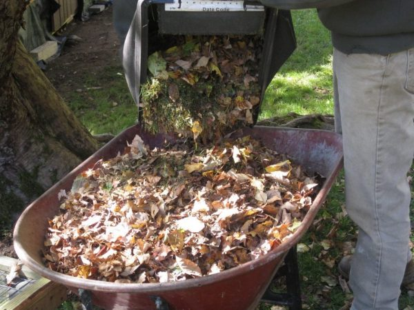 leaf compost 04