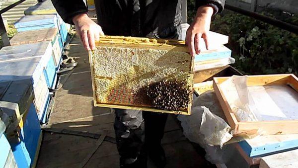 Работы на пасеке в октябре Сборка гнезда пчел на зиму Рамки в зиму - YouTube