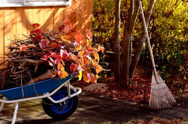 Осенние работы в саду и огороде, о которых я никогда не забываю. Подготовка  почвы к зиме. Фото — Ботаничка.ru
