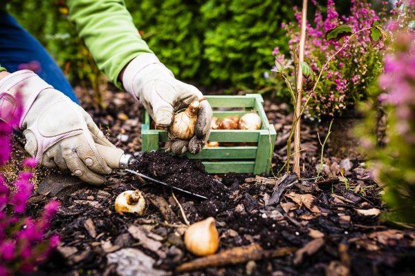 Десять обязательных садовых дел. Готовим дачный участок к зиме!