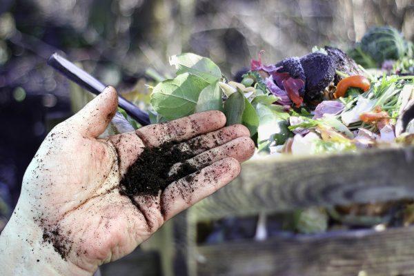 Вредные удобрения: Сорняки и больные растения могут испортить компост