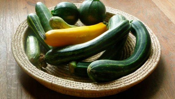 Цукини - чем отличается от кабачка. Выращивание, уход и сорта