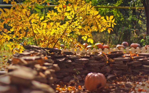 Какие деревья и кустарники сажают в начале осени — Roomble.com