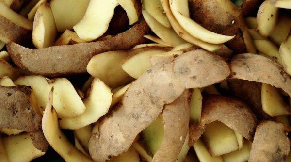 Применение картофельных очисток в саду и огороде