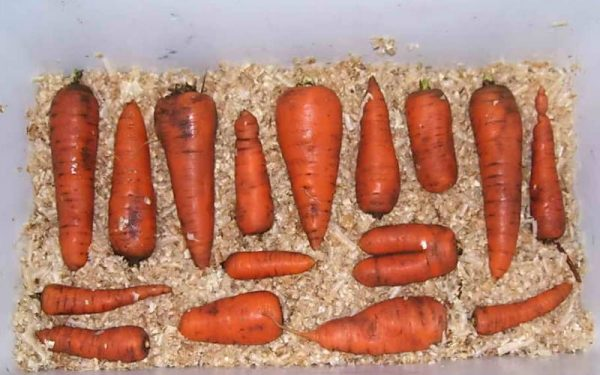 Правила хранения моркови. Самый простой и эффективный способ хранения!