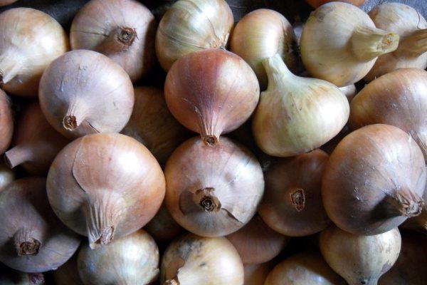Секреты лукового урожая - Огород, сад, балкон - медиаплатформа МирТесен