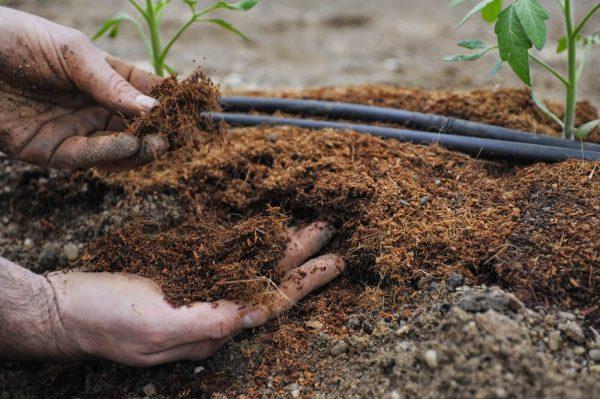 Какой слой торфа можно насыпать на огороде. Торф или перегной — что лучше