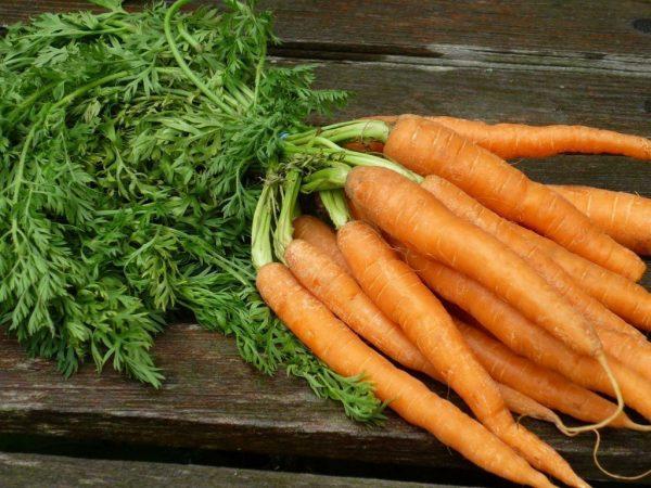 Морковь польза и вред - чего больше и надо ли вообще ее есть?