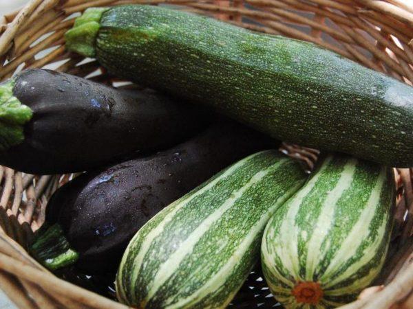 Цукини — как вырастить нежный и полезный овощ – Дизайн Кафе