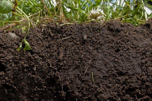 Компост: как вред превратить в пользу. Применение компоста