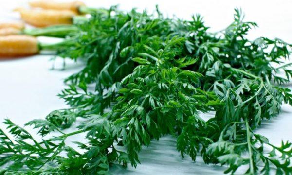 Зелень моркови