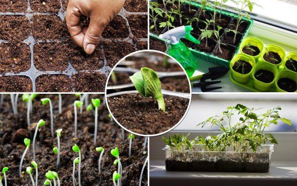 Какие овощные культуры можно высеивать под зиму? Сеем осенью, по весне собираем урожай