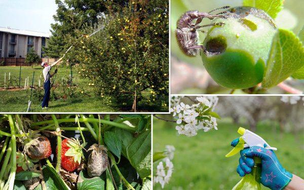 Как правильно бороться с вредителями осенью: лучшие средства и опасные места